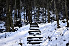 Σκαλοπάτια σε ένα δάσος Στοκ Εικόνες
