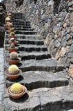 σκαλοπάτια Lanzarote κάκτων πετρώδη Στοκ φωτογραφία με δικαίωμα ελεύθερης χρήσης