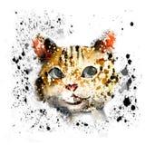 σκαλοπάτι γατών s ελεύθερη απεικόνιση δικαιώματος