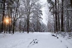 Σκανδιναβικό να κάνει σκι υπόβαθρο έννοιας το άτομο κάνει σκι στο χειμερινό δάσος στο ηλιοβασίλεμα Στοκ φωτογραφίες με δικαίωμα ελεύθερης χρήσης