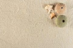 Σκανταλιάρικο παιδί στην άμμο Στοκ Εικόνες