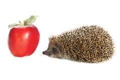 σκαντζόχοιρος μήλων Στοκ Φωτογραφία