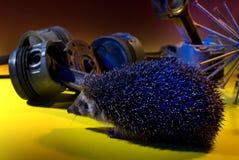 Σκαντζόχοιρος με τον μπλε φωτισμό Στοκ Εικόνα
