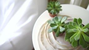 Σκανδιναβικές άσπρες εσωτερικές λεπτομέρειες εγχώριων ντεκόρ, succulents στον πίνακα φιλμ μικρού μήκους