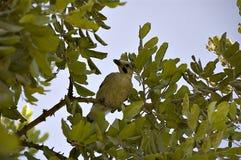 σκαρφαλωμένο πουλί δέντρ&omi Στοκ φωτογραφία με δικαίωμα ελεύθερης χρήσης