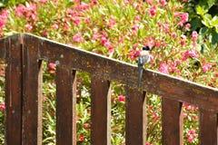Σκαρφαλωμένο πουλί σε μια πύλη του κήπου στοκ φωτογραφία