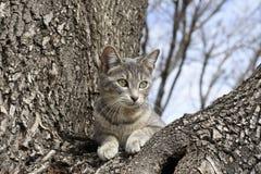 Σκαρφαλωμένη γάτα δέντρων Στοκ φωτογραφίες με δικαίωμα ελεύθερης χρήσης