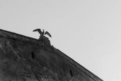 σκαρφαλωμένη γλάρος θάλασσα Στοκ Εικόνες
