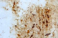 Σκαρφαλωμένος σε ένα σκουριασμένο πιάτο χάλυβα Στοκ Εικόνα