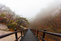 Σκαλοπάτια επάνω στο βουνό Bukhansan Στοκ φωτογραφίες με δικαίωμα ελεύθερης χρήσης
