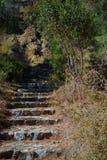 Σκαλοπάτια στο δάσος Στοκ Εικόνες