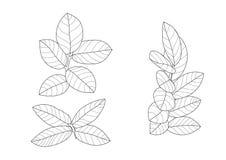 Σκελετικό ευθυγραμμισμένο φύλλα σχέδιο στο άσπρο διάνυσμα απεικόνισης υποβάθρου απεικόνιση αποθεμάτων