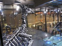 Σκελετοί των δεινοσαύρων στοκ φωτογραφία με δικαίωμα ελεύθερης χρήσης