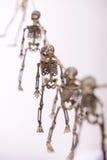 σκελετοί στοκ εικόνα με δικαίωμα ελεύθερης χρήσης