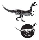 σκελετός δεινοσαύρων Στοκ Φωτογραφίες
