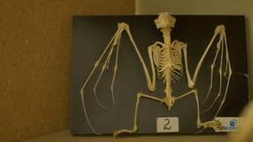 Σκελετός ενός ροπάλου φιλμ μικρού μήκους