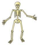 σκελετός κινούμενων σχ&epsilo Στοκ Εικόνα