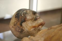 σκελετός μουμιών Στοκ Φωτογραφίες