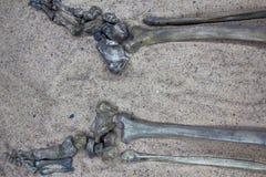 Σκελετός (πόδι) του νέου πολεμιστή Στοκ φωτογραφίες με δικαίωμα ελεύθερης χρήσης