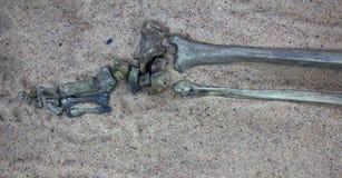 Σκελετός (πόδι) του νέου πολεμιστή Στοκ Εικόνα