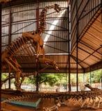 Σκελετός του tiguidensis Jobaria δεινοσαύρων σε Niamey, Νίγηρας Στοκ φωτογραφία με δικαίωμα ελεύθερης χρήσης