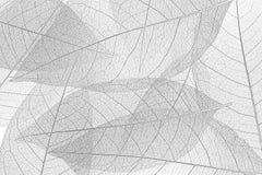 σκελετός φύλλων ανασκόπ&eta Στοκ Εικόνες