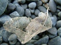 σκελετός φύλλων Στοκ φωτογραφία με δικαίωμα ελεύθερης χρήσης