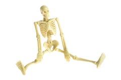 σκελετός Στοκ εικόνα με δικαίωμα ελεύθερης χρήσης