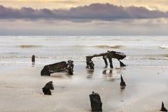 σκελετός 5 Στοκ εικόνα με δικαίωμα ελεύθερης χρήσης