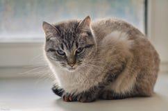 Σκεπτική γάτα Στοκ φωτογραφία με δικαίωμα ελεύθερης χρήσης
