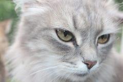 Σκεπτική γάτα Στοκ Εικόνες