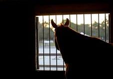 Σκεπτικό άλογο Στοκ Εικόνα