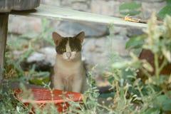 Σκεπτικό γατάκι στη χλόη στοκ φωτογραφία με δικαίωμα ελεύθερης χρήσης
