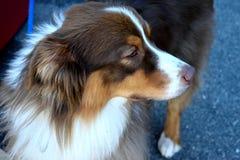 Σκεπτικό σκυλί Στοκ εικόνες με δικαίωμα ελεύθερης χρήσης