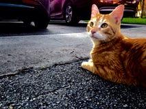 Σκεπτόμενη γάτα Στοκ εικόνες με δικαίωμα ελεύθερης χρήσης
