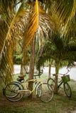 Σκεφτείτε τα πράσινα ποδήλατα έννοιας στις θερινές διακοπές στοκ φωτογραφία