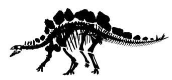 Σκελετός δεινοσαύρων ελεύθερη απεικόνιση δικαιώματος
