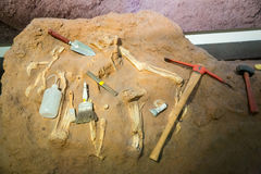 Σκελετός και αρχαιολογικά εργαλεία γύρω Στοκ Φωτογραφίες