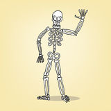 Σκελετός κινούμενων σχεδίων Στοκ Εικόνες