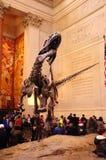 Σκελετός της Dino δεινοσαύρων στο αμερικανικό μουσείο της Νέας Υόρκης NYC της φυσικής ιστορίας Στοκ Φωτογραφία