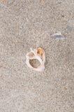 Σκελετός της Shell Στοκ εικόνες με δικαίωμα ελεύθερης χρήσης