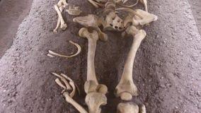 σκελετός απόθεμα βίντεο