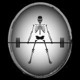 Σκελετός Bodybuilder Απεικόνιση αποθεμάτων