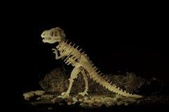 Σκελετός Dinosaurus στοκ εικόνες