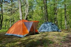 σκηνές δύο δάσος Στοκ Εικόνα