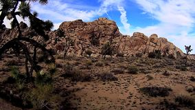 Σκηνές ερήμων δέντρων του Joshua