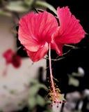 Σκηνές φύσης λουλουδιών Στοκ Φωτογραφίες