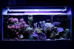 Σκηνή δεξαμενών ενυδρείων κοραλλιογενών υφάλων Στοκ εικόνες με δικαίωμα ελεύθερης χρήσης