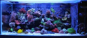 Σκηνή δεξαμενών ενυδρείων κοραλλιογενών υφάλων Στοκ φωτογραφία με δικαίωμα ελεύθερης χρήσης