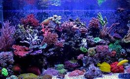 Σκηνή δεξαμενών ενυδρείων κοραλλιογενών υφάλων Στοκ Εικόνες